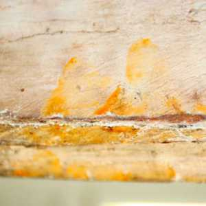 ताबूत के अंदर मिले 3,000  साल पुराने फिंगरप्रिंट