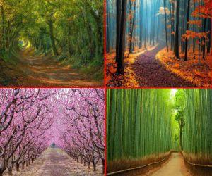 तस्वीरों में देखें,धरती पर मौजूद 20 खूबसूरत रास्ते