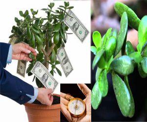 चुंबक की तरह धन को घर की ओर खींचता है ये पौधा