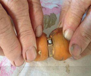 सालों पहले खोई डायमंड रिंग निकली गाजर के साथ
