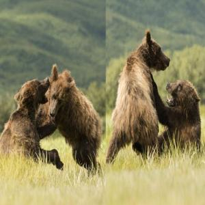 PICS : Incredible Bear Fighting