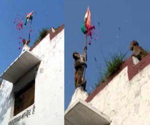 जब बंदर ने फहराया सरकारी स्कूल में तिरंगा, देखें वीडियो