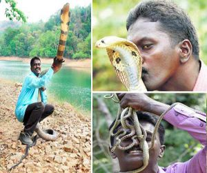 किंग कोबरा को नचाता है अपने इशारों पर, 3000 बार काट चुके हैं सांप