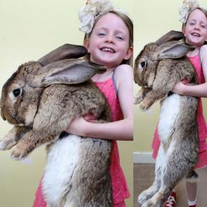 PICS : world\'s biggest rabbit or can say Easter Bunny!