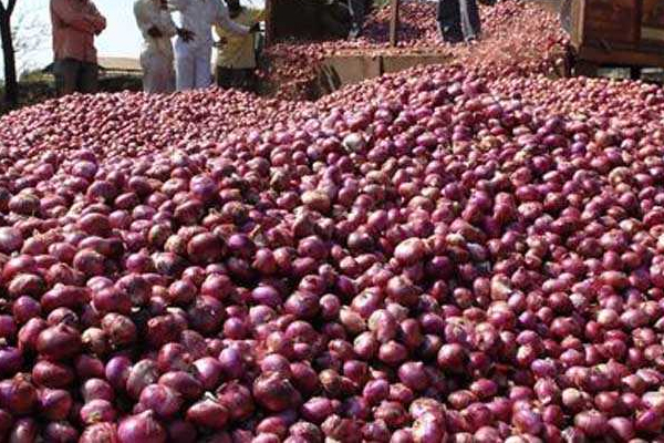 government allows onion exports from 15 march 432262