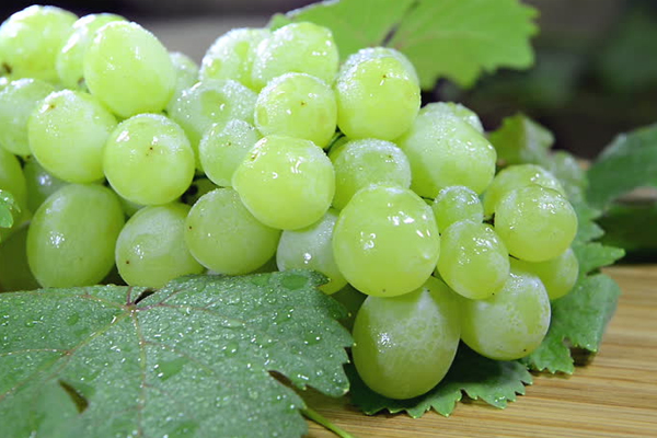 ari pune developed new variety of juicy grapes 433592