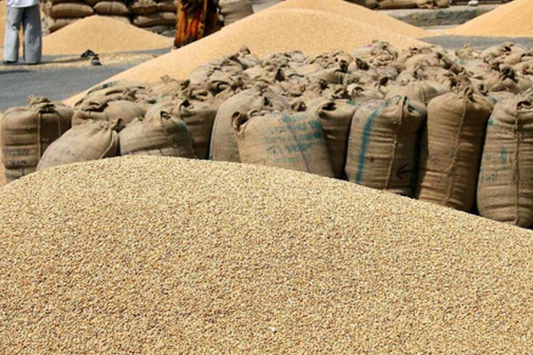 government agencies across the country bought 252 lakh tonnes of wheat from farmers 440615