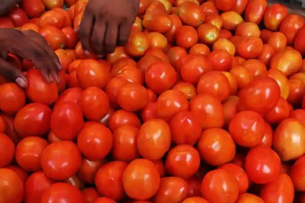 tomato becomes red the price in delhi is rs 70 a kg 444850