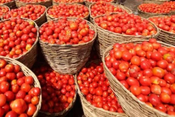 tomato inflation did not stop prices increased even after arrival 445564