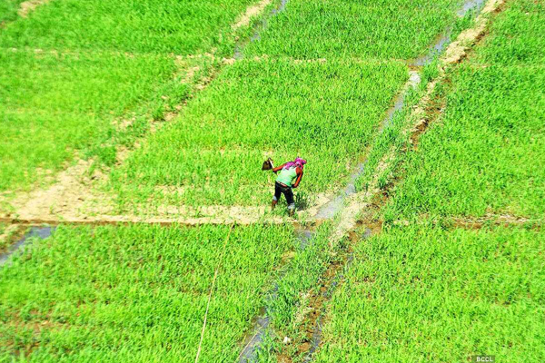 rabi crops sown in 598 lakh hectares across the country 463076