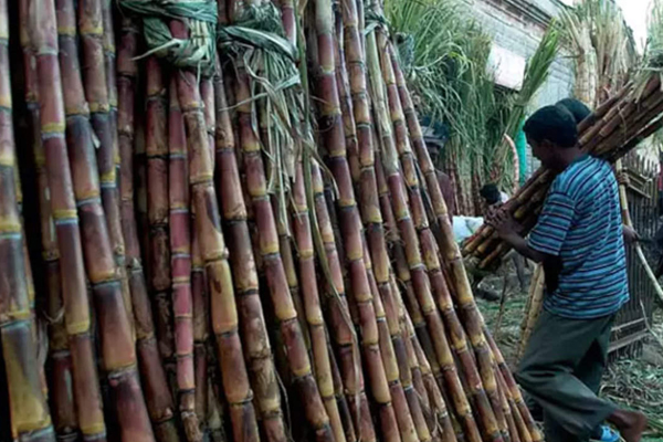 sugar mills owe about rs 20000 crores to sugarcane highest in up 472271