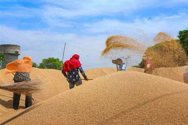 wheat procurement central government sends rs 49965 crore directly into farmer account 477959