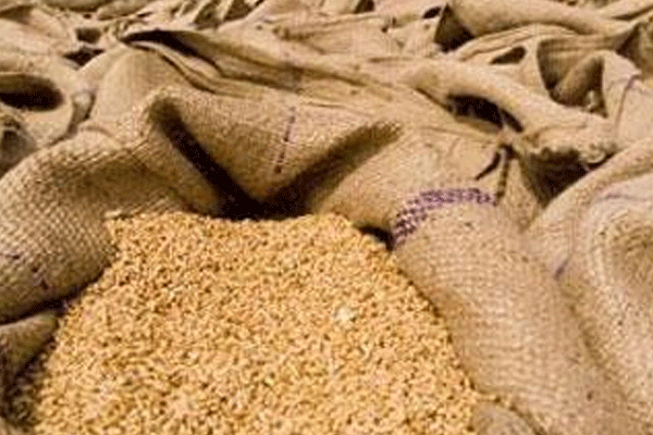so far 3377 lakh metric tonnes of wheat has been purchased from 671 lakh farmers in up 479370