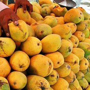 Eu Bans Indian Alphonso Mangoes Veggies From One May