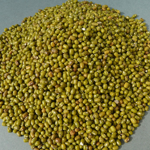 Moong developed only species which will be ready in 55 days