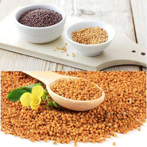 Health benefits of mustard seed - Lifestyle News in Hindi