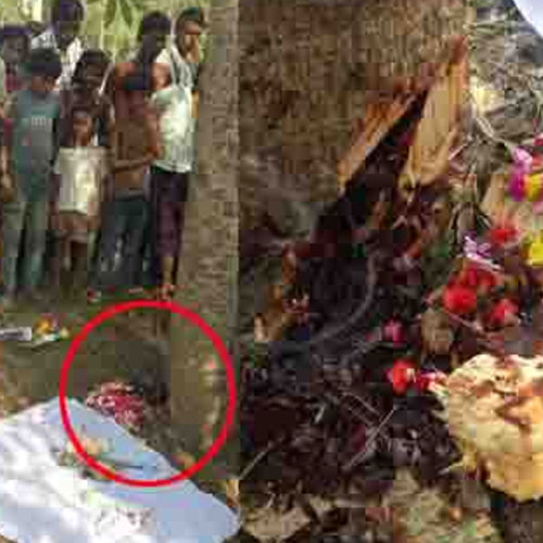 Amazing tree secretes blood, Must Read - India News in Hindi