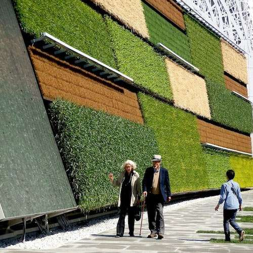 Amazing science growing veggies on wall in Jerusalem - OMG News in Hindi