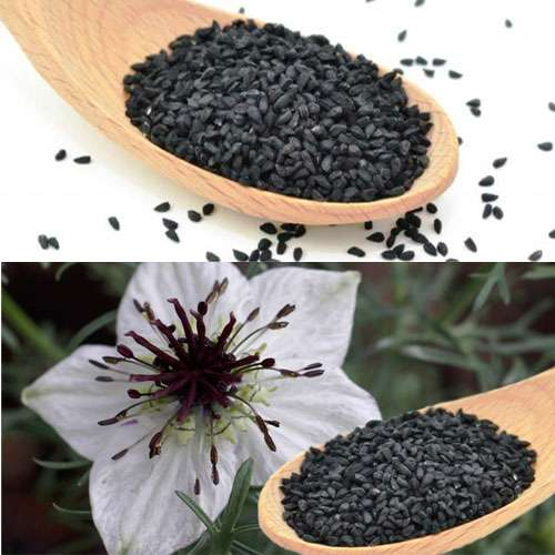 To know health benefits of Nigella - Lifestyle News in Hindi