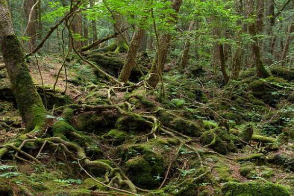 japan suicide forest where dozens choose to kill themselves every year - OMG News in Hindi