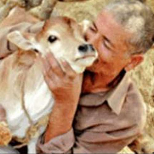 Afaq Ali departs from wife for cows - India News in Hindi