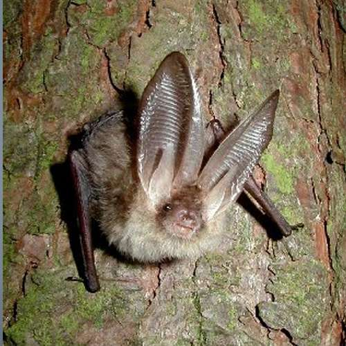Bihar villagers worship bats as God - OMG News in Hindi