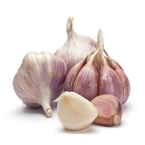 lifestyle health benefits of garlic - Lifestyle News in Hindi