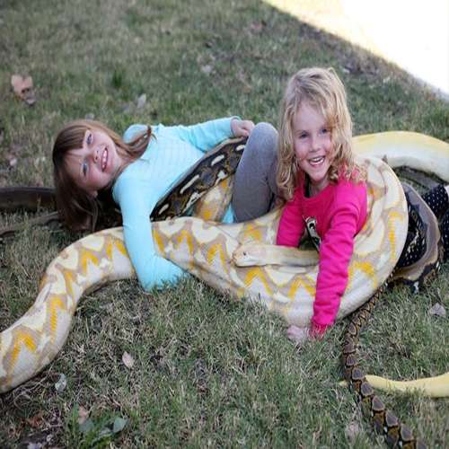 Amazing zing children caught playing with 19 feet python - OMG News in Hindi