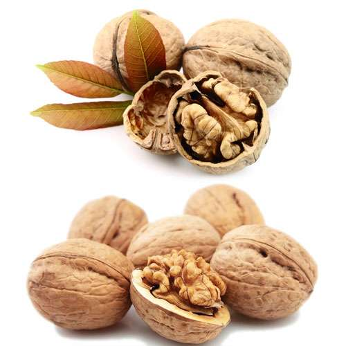 Health benefits of walnut - Jaipur News in Hindi