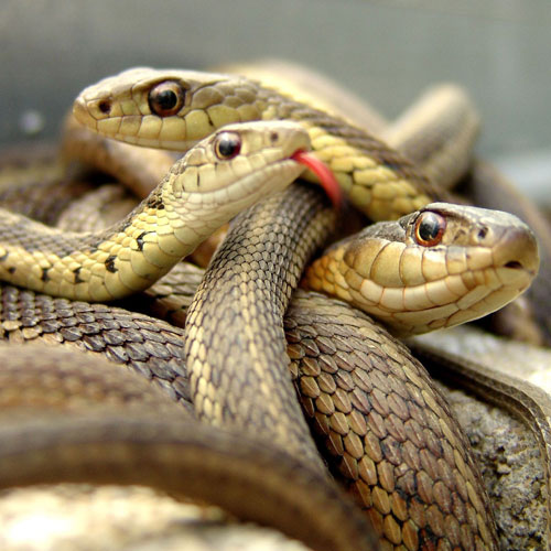 ajabgajab  effects associated with snakes will be surprised to know - OMG News in Hindi