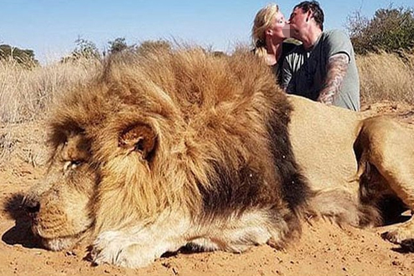 SHOCKING photo : Couple ripped for romantic pic next to lion they killed - Weird Stories in Hindi
