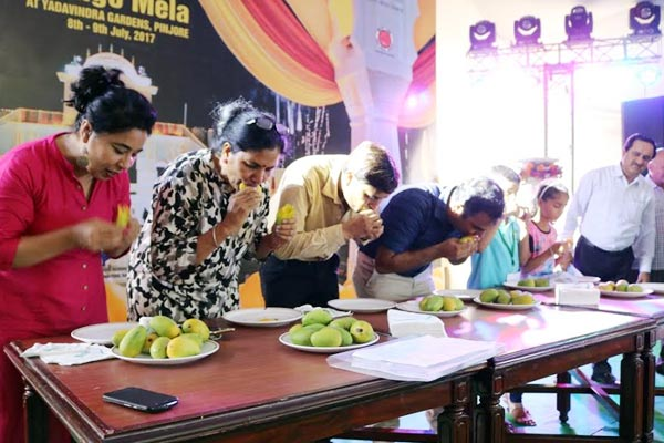 26th Mango fair organized in Panchkula, students compete in competition - Panchkula News in Hindi