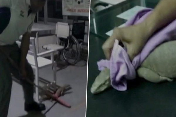 सरकारी अस्पताल आई 3 फीट लंबी छिपकली, लोग करने लगे हंगामा