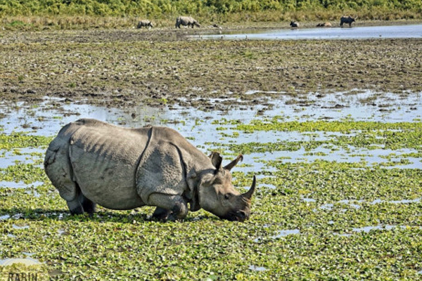 Only 42 rhinos remain in Dudhwa National Park - Lucknow News in Hindi