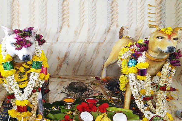 some special and strange temples in india - Wonders News in Hindi