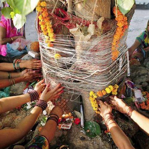 These trees worship meets pleasure get money and opulence - Vastu Tips in Hindi