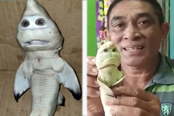 Miracle! These shark fish look like humans, you will be stunned by seeing the pictures - Weird Stories in Hindi