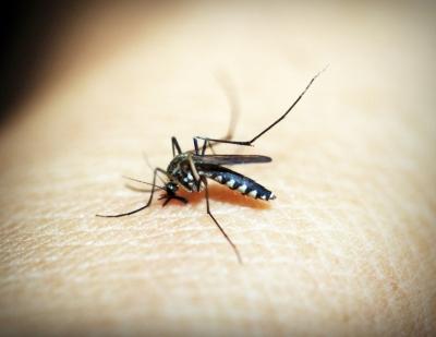 In view of the increasing cases of dengue-malaria, Gurugram increased the screening at the border - Gurugram News in Hindi