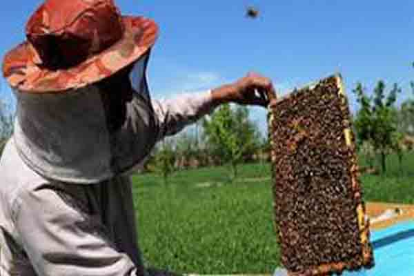 Kurukshetra-Afghanistani Farmers visited beekeeping center - Kurukshetra News in Hindi