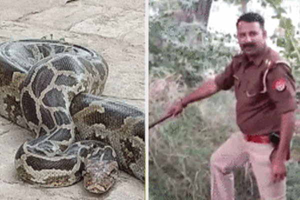OMG: This inspector also catches snakes - Weird Stories in Hindi