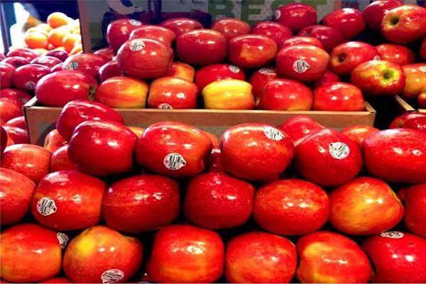 हिमाचल के सेब उत्पादकों को भरपूर बारिश से लाभ की उम्मीद