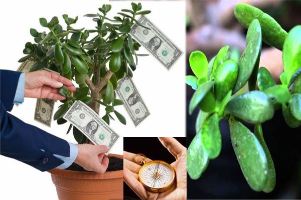 This Jade Plant In The House Attracts Money Like A Magnet - Vastu Tips in Hindi