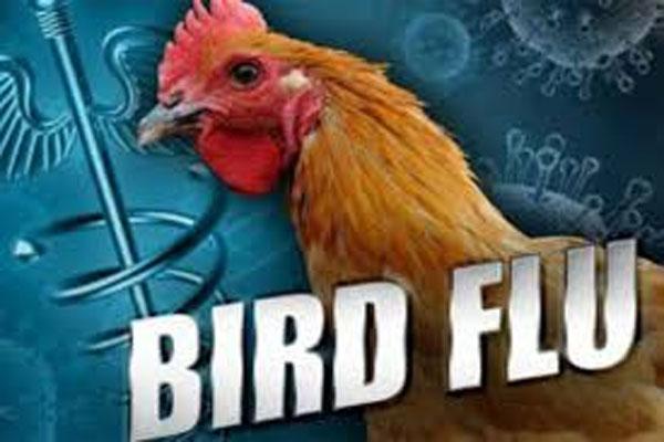 Increasing scope of bird flu is worrying in Madhya Pradesh - Bhopal News in Hindi