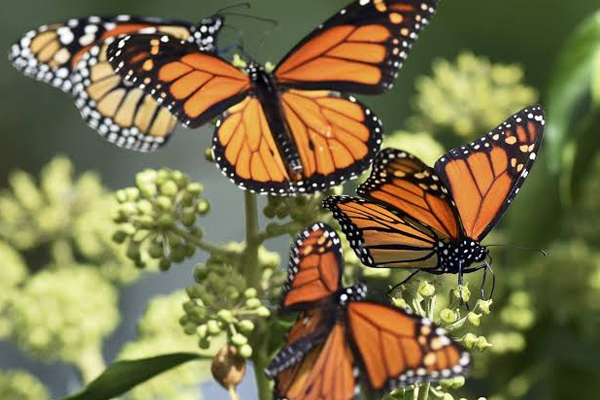 A colorful world of butterflies will be decorated soon in Gorakhpur - Gorakhpur News in Hindi