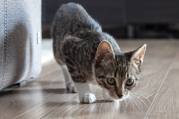 Those who keep cats in their homes should take special care of this - Jyotish Nidan in Hindi