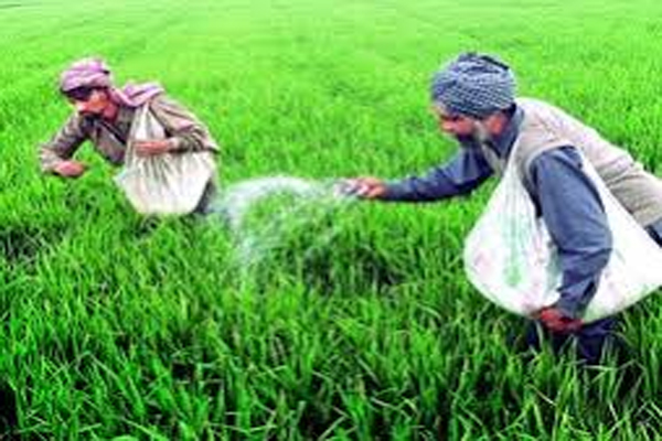 Urea deficiency in the state - Jaipur News in Hindi