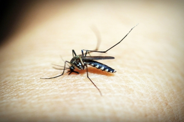 गुरुग्राम में डेंगू के मामले बढ़े, 133 पहुंची संख्या