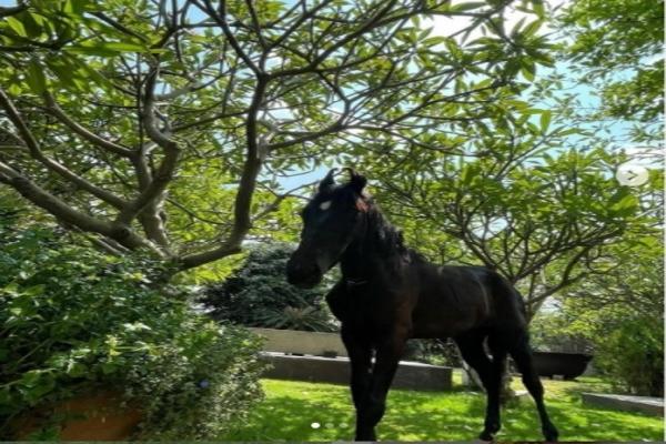 Dhoni brings home a stallion, names him Chetak - Cricket News in Hindi