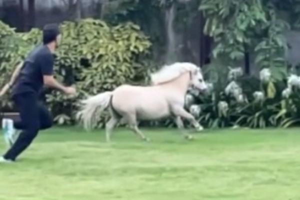 घोड़े के साथ रेस लगाकर धोनी ने अपनी फिटनेस को परखा
