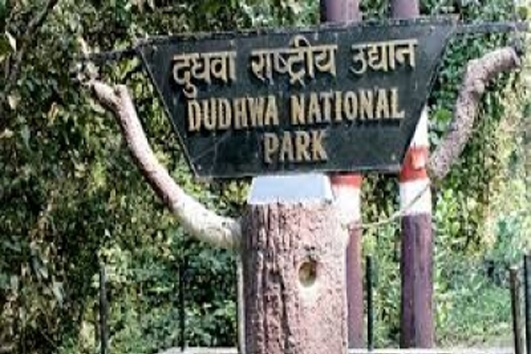 Captured elephant shifted to Dudhwa reserve - Lucknow News in Hindi